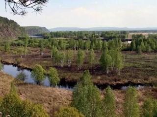 阿木尔香獐岭湿地