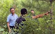 林管局副局长刘志深入漠河调研造林和绿化工作